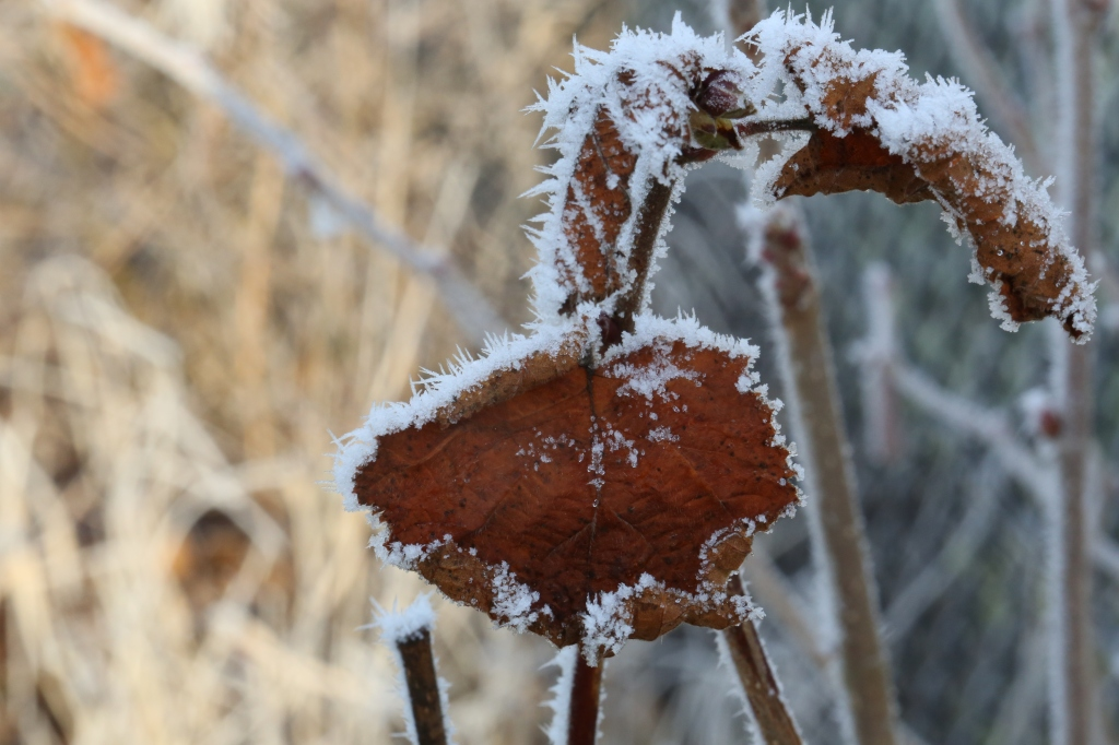 Frosted to a crisp.....