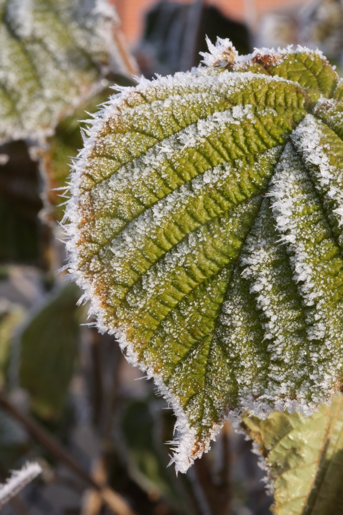 Frosted Veins