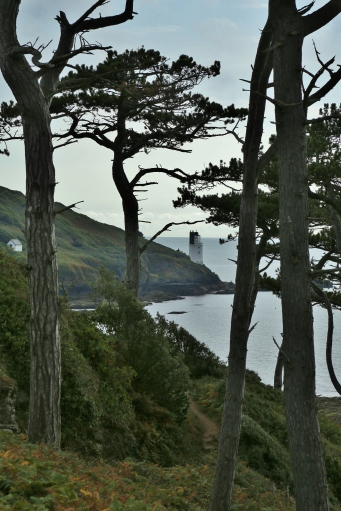 St Anthony's Lighthouse through old pines
