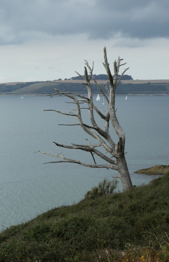 Bare tree and yacht