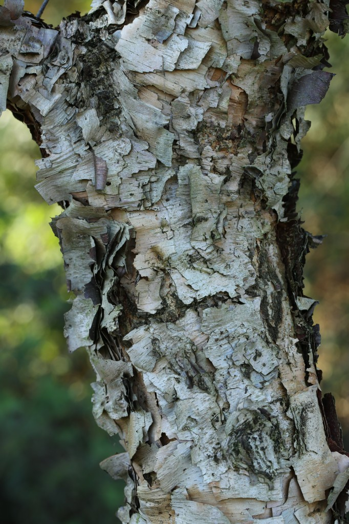 Reptile-like bark
