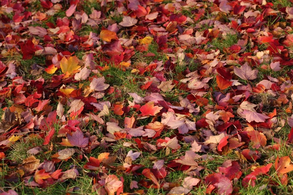 Acer Carpet