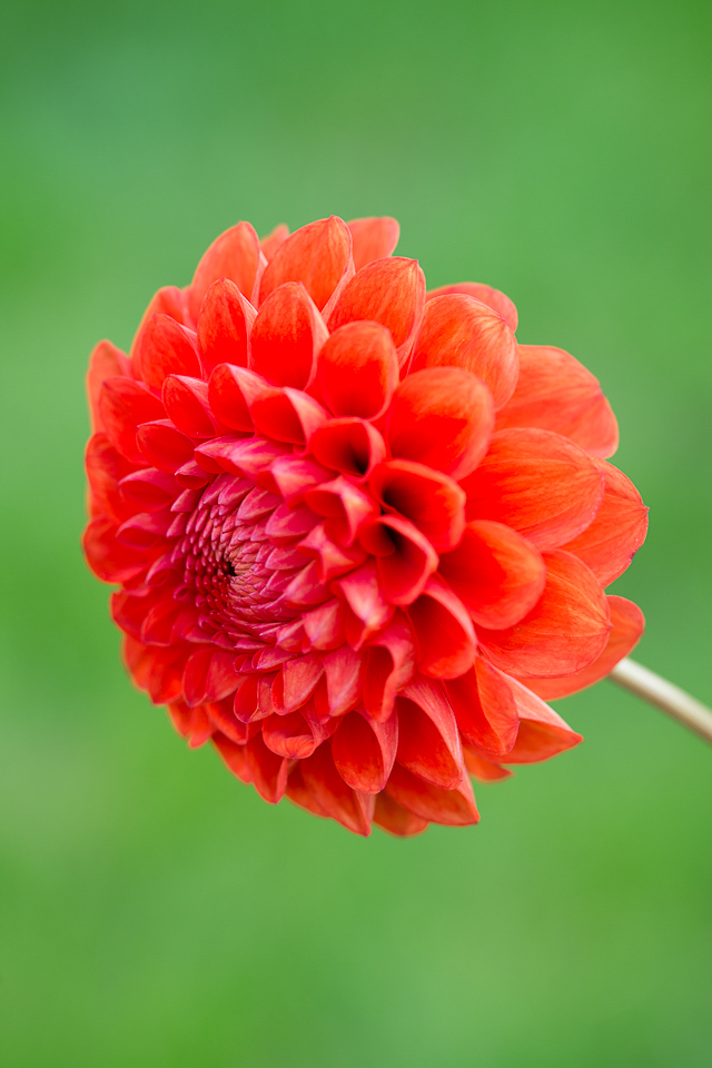 Dark Orange Pom Pom-8