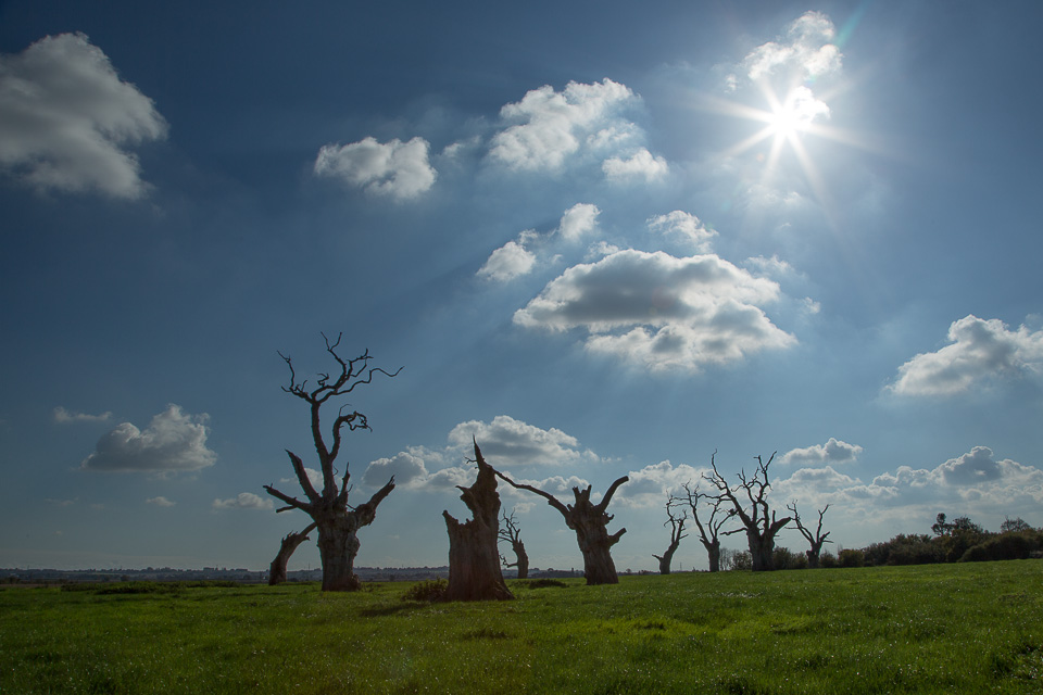 Mundon Tree 4 (4 of 1)